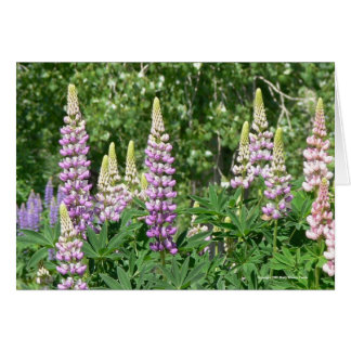 Lovely Lupines Card