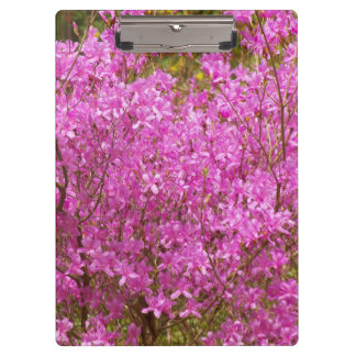 Lovely Pink Rhododendrons Floral Clipboard