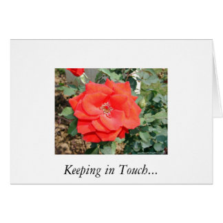 Lovely Rose Keeping In Touch Card. Greeting Card