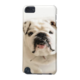 Loyal White Bulldog Photograph iPod Touch (5th Generation) Cover
