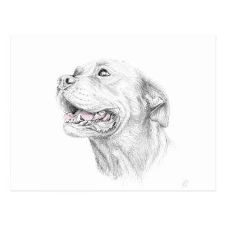 Loyalty, An American Staffordshire Terrier Postcard