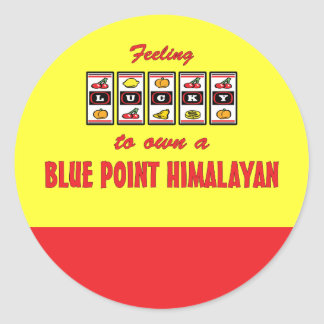 Lucky to Own a Blue Point Himalayan Fun Cat Design Classic Round Sticker