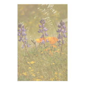 Lupine Flowers Wildflowers Meadow Floral Lupin Stationery