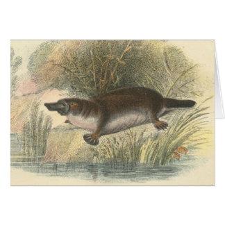 Lydekker - Platypus Card