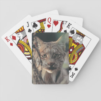 Lynx, Lynx canadensis, Denali National Park, Playing Cards