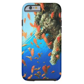Lyretail anthias on coral reef tough iPhone 6 case