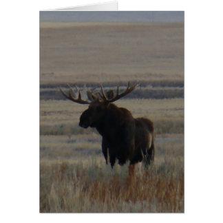 M0001 Bull Moose Card