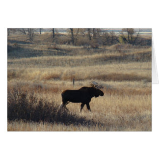 M0005 Bull Moose Sand Hills Card