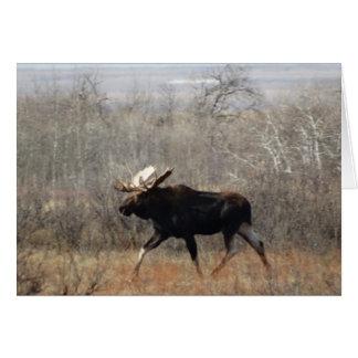 M0010 Bull Moose Card
