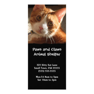 Mac Cat Photo Animal Adoption Bookmark Customized Rack Card