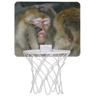 Macaca sylvanus mini basketball hoop