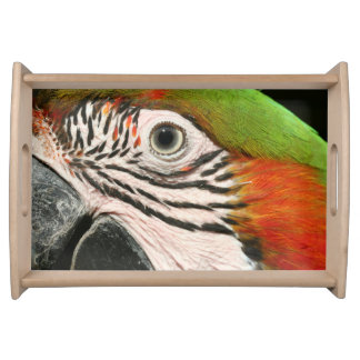 Macaw Parrot featuring Harlequin Macaw Serving Trays