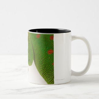 Madagascar day gecko (Phelsuma madagascariensis 2 Two-Tone Coffee Mug