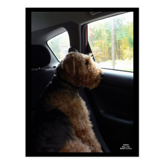 Madeleine Takes a Drive Postcard