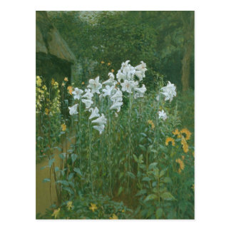 Madonna Lilies in a Garden Postcard