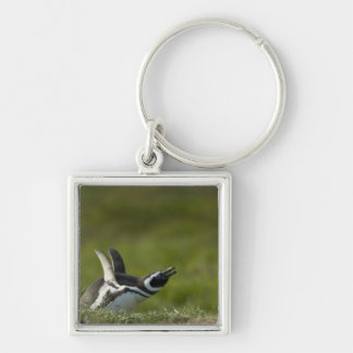 Magellanic Penguin, Spheniscus magellanicus, Silver-Colored Square Key Ring