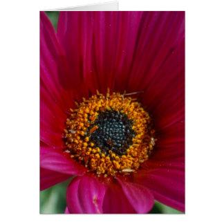 Magenta Flower Card