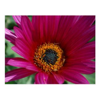 Magenta Flower Postcard