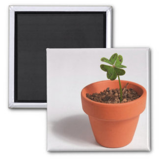 Magnet: Lucky Four-leaf Clover in a Clay Pot Square Magnet