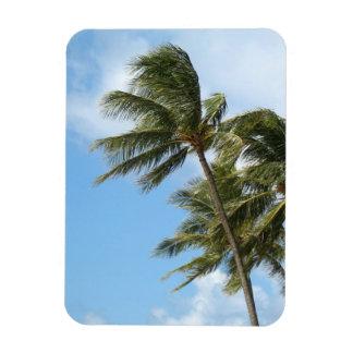 Magnet - Oahu Palms