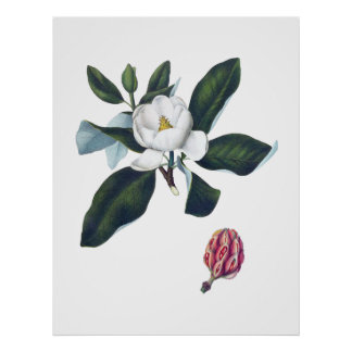 Magnolia White Large Flower Cusion Poster