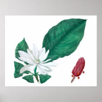 Magnolia White Large Flower Print Horizontal