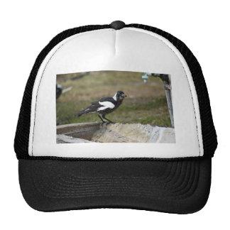 MAGPIE BLACK & WHITE RURAL QUEENSLAND AUSTRALIA CAP
