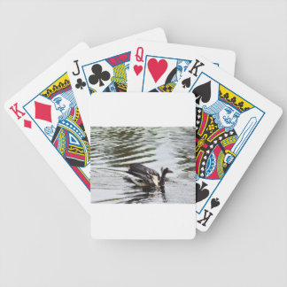 MAGPIE GEESE RURAL QUEENSLAND AUSTRALIA BICYCLE PLAYING CARDS