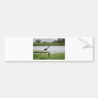MAGPIE GEESE RURAL QUEENSLAND AUSTRALIA BUMPER STICKER