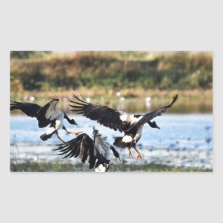 MAGPIE GEESE RURAL QUEENSLAND AUSTRALIA RECTANGULAR STICKER