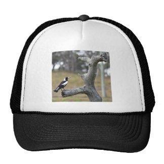 MAGPIE RURAL QUEENSLAND AUSTRALIA CAP