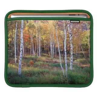 Maine, Acadia National Park, Autumn iPad Sleeve