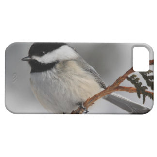 Maine Chickadee iPhone 5 Case