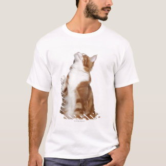 Maine Coon (6 months old) sitting and looking up T-Shirt
