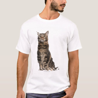Maine Coon (8 months old) T-Shirt