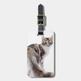 Maine Coon cat Luggage Tag