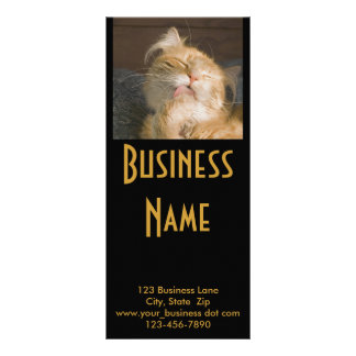 Maine Coon Cat Photograph Customised Rack Card