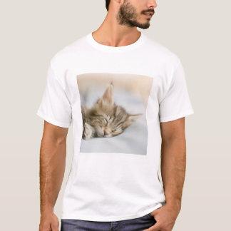 Maine Coon Kitten Sleeping T-Shirt