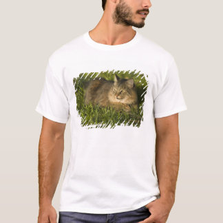 Maine coon (largest breed of domestic cats) T-Shirt