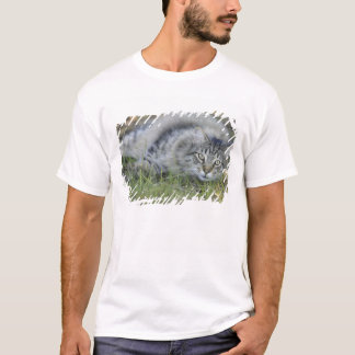 Maine Coon laying in grass, Central Florida. T-Shirt
