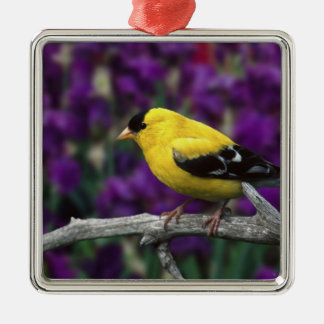 Male, American Goldfinch in summer plumage, Christmas Ornament