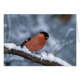 Male Bullfinch in the Snow Card