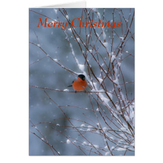 Male Bullfinch in the Snow Merry Christmas Card