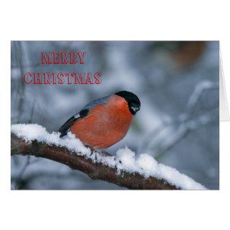 Male Bullfinch in the Snow  Merry Xmas Card