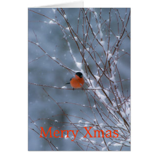 Male Bullfinch in the Snow Merry Xmas Card