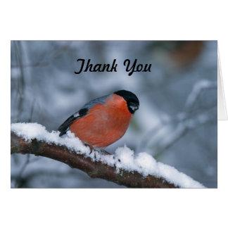 Male Bullfinch Thank You Card