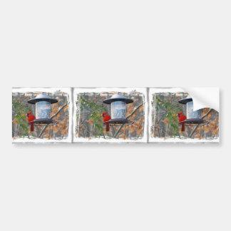Male Cardinal Bumper Sticker