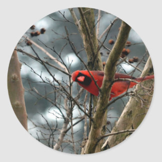 Male Cardinal Playing Funny Classic Round Sticker