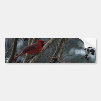 Male Cardinal Posing Pretty Bumper Sticker