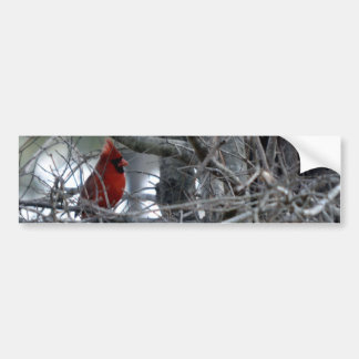 Male Cardinal Watch Guard Bumper Sticker